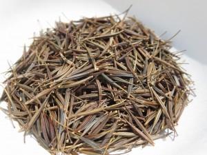 キバナコスモス種